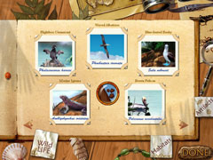 Island Adventure Duo Bundle thumb 2